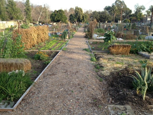 Altadena Community Garden